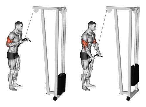 ¿Cómo aumentar el tamaño de tus brazos?, ejecuta los ejercicios correctamente