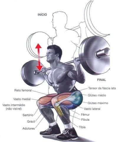 Músculos de la pierna implicados