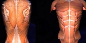 musculos implicados