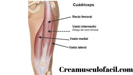 Músculos implicados en las extensiones de piernas