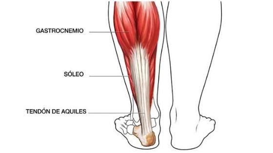 Músculos implicados en la elevación de talones