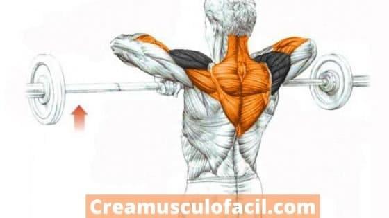 Músculos implicados en el remo al cuello o al mentón
